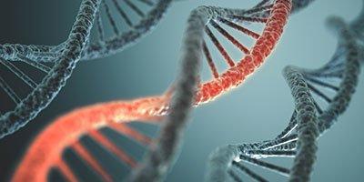 Gb: tre Dna per un embrione