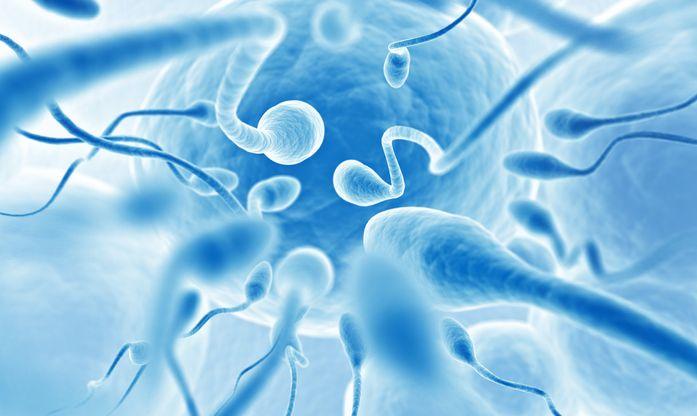 Un altro nostro lavoro pubblicato, questa volta sul Journal of Assisted Reproduction and Genetics