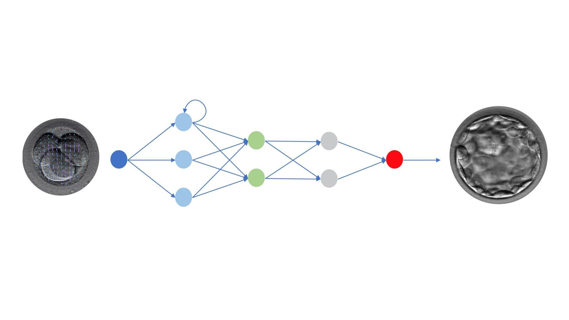In pubblicazione su RBM on line un nostro lavoro su intelligenza artificiale e sviluppo a blastocisti