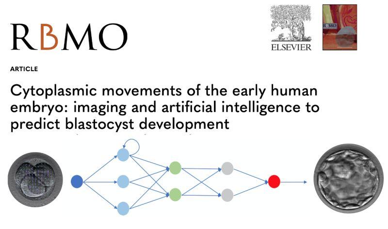 Pubblicato su RBM un nuovo studio di 9.baby e dell'Università di Pavia: grazie all'intelligenza artificiale, si indaga sul legame tra lo sviluppo della blastocisti e i movimenti del citoplasma embrionale